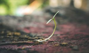 Posttraumatisches Wachstum